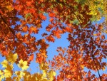 10 Things About Fall That Will Make You Love The Season